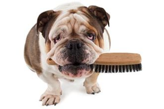 Animals-Bulldog_Brush