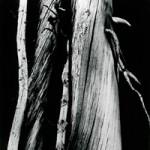 מאמר מאת יהודה חשאי על הקריירה של האמן אנסל אדמס - Ansel-Adams