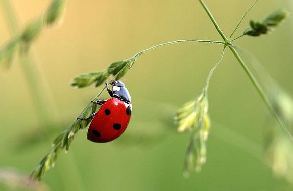 ladybug-All--Kinds-Articles