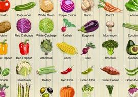 Vegetables-Set2-illustrator_S