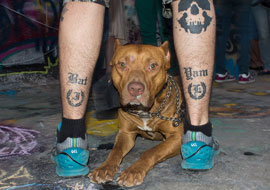 Buldog-Animal-Legs-Burning-King-Event_S