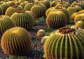 Kaktus-Nature-Park-Hayarkon_S