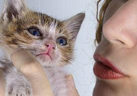 Cat-Woman-Animal-Yasmin_S