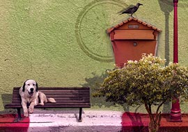 Animals-street_Photoshop_S