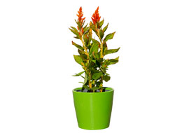 Flower-Pot1-Freebies_S