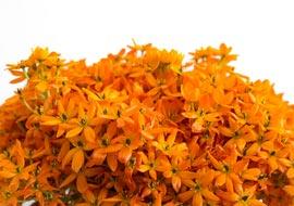 Flower-Orange-Bouquet-Freebies_S