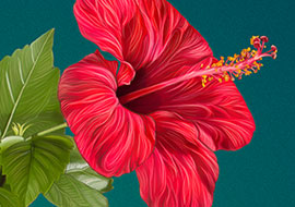 Flower-Hibiscus-Paint_Photoshop_S