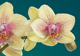Flower-Orchid-Paint_Photoshop_S