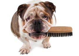 Animals-Bulldog_Brush_S