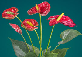 Flower-Anthurium-Paint_Photoshop_S