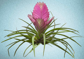 Flower-Pink-Exotic-Paint_Photoshop_S