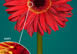 Flower-Red-Gerbera-Paint_Photoshop_S