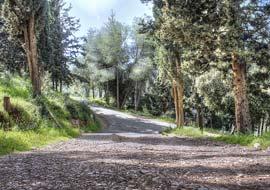 Tree-Path2-Freebies_S