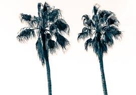 Tree-Pulm-Couple-Freebies_S