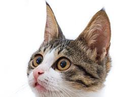 cat-fufi1-animal-s2