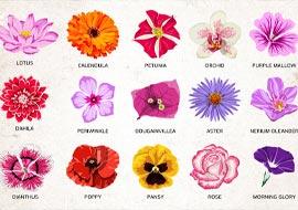 איור פרחים